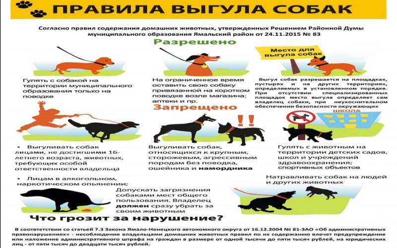 правила содержания и выгула собак